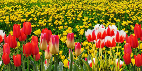 Floriade – A Brighter Holiday on the Horizon